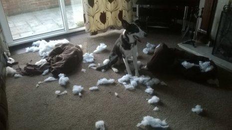 Беспорядок от собаки