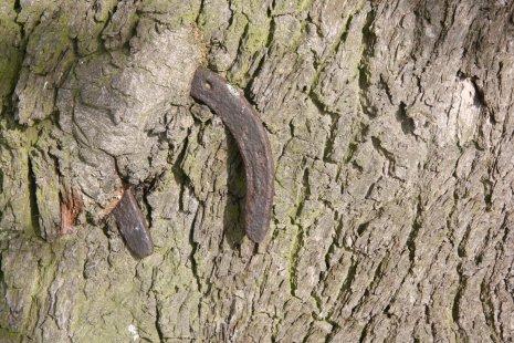 Подкова в дереве