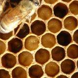 Пчелиная детка