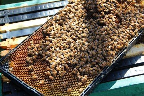 Пластиковая рамка с пчелами