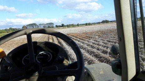 Первые заморозки на картофельной поле