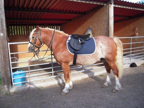 Конь под седлом