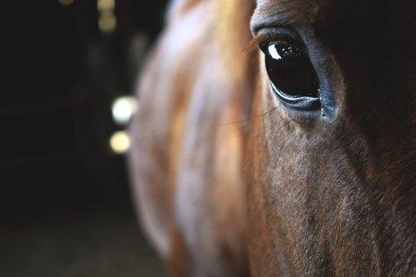 Глаза лошади