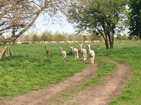 Животные на прогулке
