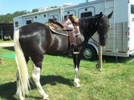 Красавец конь