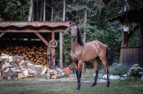 Спортивная лошадка