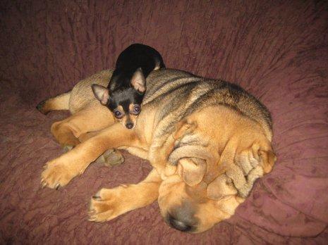 Прикольная маленькая собачка