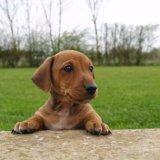 Красивый щенок собаки