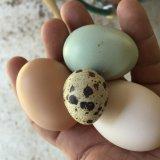 Яйца различных видов птиц