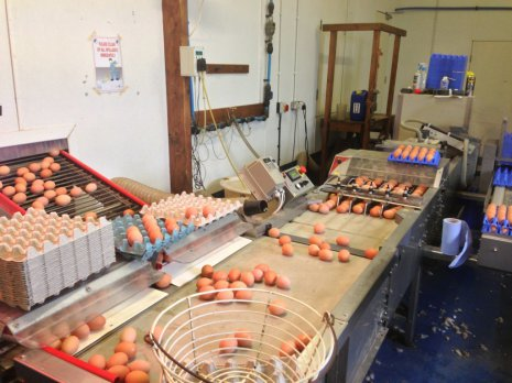 Как сортируют яйца