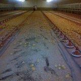 Цех для содержания цыплят