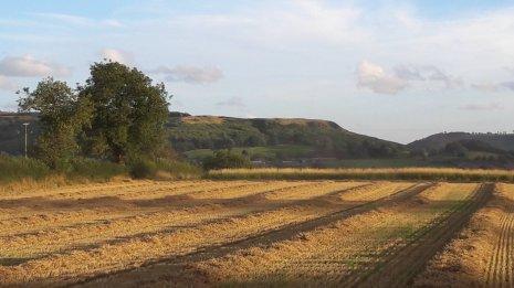 Свежеубранное поле