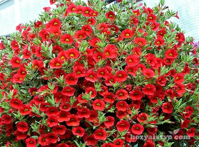 Какие цветы есть для сада название и фото