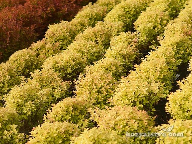 Бизнес план декоративных растений идеи бизнеса американские сайты